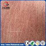 madera contrachapada comercial de la madera del álamo de 9m m 12m m 15m m 18m m con la chapa de Bintangor
