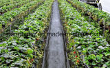 景色の雑草防除の庭のマット