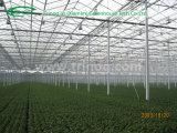 Multi Überspannungs-Glasgewächshaus für Tomaten