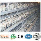 Automatische de Levering van de Fabriek van China een Kooi van de Kip van de Laag van de Batterij van het Type