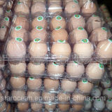 Clamshell Plástico PVC / PP / Pet Packaging Case Eggs Tray Packaging