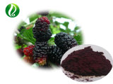 Best Anti-Oxidation Mulberry Extrato de fruta antocianina 20% 25%