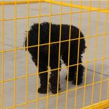 Fossa di scolo esterna del cane migliore della rete metallica di colore di colore giallo di prezzi grande