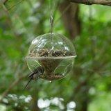 Alimentatore selvaggio d'attaccatura dell'uccello, cristallo - acrilico libero