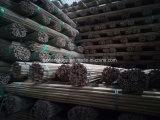 農業のための広東省のタケ生産
