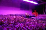 La cosecha hidropónica de la luz 300W de la planta del LED crece la iluminación