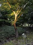 IP65は庭の使用のためのスパイクが付いている3W LEDライトを評価した