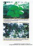 Unigrow 미생물 유기 비료