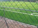 Rete fissa del campo sportivo/rete fissa collegamento Chain