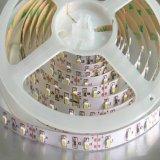 Striscia di alta luminosità 60LEDs/M 4.8W SMD 3528 LED