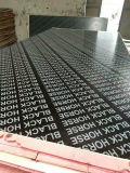 Materiales de construcción de 13 mm de finger joint film enfrenta la madera contrachapada con núcleo de álamo