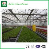 De Serre van het Glas van Venlo voor de Tuinbouw van de Bloem van de Komkommer van de Tomaat