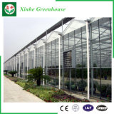 Casas verdes de la agricultura de la hoja de la PC/de la hoja del policarbonato para el tomate/la fruta/las flores