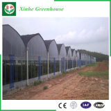 Invernadero plástico de una sola capa con el marco de acero galvanizado caliente