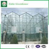 Jardin/agriculture des serres chaudes en verre de tunnel pour horticulture de légume/