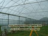 Invernadero de la hoja del policarbonato para plantar