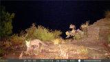 Bestguarder 12MP HD1080p à prova de infravermelhos invisíveis Scouting trilha de caça selvagem Jogos Camera Sg-990V