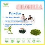 Преимущества питания хлореллы качества еды