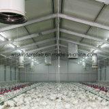 Las aves de corral de acero prefabricadas del edificio contienen