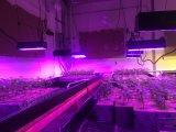 400W Veg/Conmutadores flores crecen en todo el espectro de luz LED
