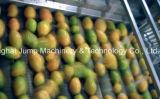 Komplette aufbereitende Zeile für Mangofrucht-Masse konzentriert Brix 26-30 im aseptischen Beutel
