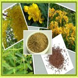 Top Of quality Of cassia Of nomame Of extract of for Of foods and Supplement