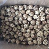 Prix favorable l'usine de champignons shiitake séchés