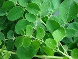Порошок листьев Moringa для диетического дополнения