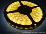 Décoratif coloré 5054 IP65 imperméable à l'eau S Style Flexible LED Strip