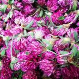 イソフラボン2%-40%が付いている自然な赤いクローバーの粉のエキス
