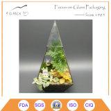 Geval van de Cactussen van de Varen van het Mos van de Doos van Terrarium van het Glas van het tafelblad het Geometrische Succulente