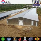 Il pollame alloggia, bestiame, Camera di pollo, azienda avicola (PCH-9)
