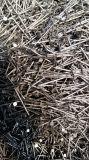 Usine-Polir le clou courant de fil