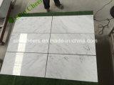 Azulejo de mármol blanco al por mayor de Statuario Carrara del oro de Arabescato Calacatta del suelo