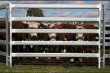 重い電流を通された牛ヤードの塀のパネル