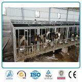 畜産場のために取除かれる経済的な鉄骨構造組立て式に作られた牛牛