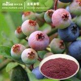 100% naturel de la poudre de fruits de bleuets