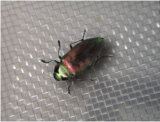 Сетка экрана насекомого стеклоткани высокого качества