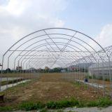 온실에 있는 높은 갱도 필름 온실 성장하고 있는 야채