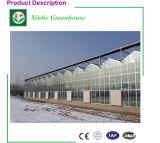 Casa verde de cristal prefabricada popular para la granja vegetal