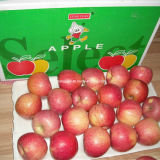 Regelmäßiger Lieferant frisches rotes Qinguan Apple