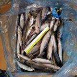 Chinchard Trachurus japonicus congelés de poisson pour marché de l'Afrique et Moyen-Orient