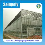 大きい農業の野菜ガラス温室