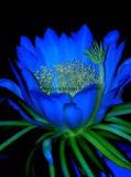 Greensource, película da transferência térmica para flores de Lovly