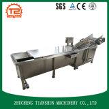 Máquina de proceso del jengibre con la arandela del cepillo para Tsxg-30 que se lava comercial