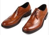 L'OEM assiste le calzature dei pattini di vestito dagli uomini dei pattini di cuoio