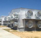 Aziende agricole di pollo prefabbricate della struttura d'acciaio