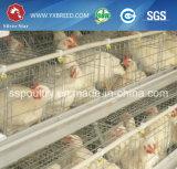 Cages de batterie neuves de couche d'oeufs de machines de ferme avec des câbles d'alimentation