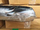 Bevroren Blauwe Makreel van Vreedzame Overzeese Makreel (8-10)