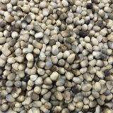 425g de champignons en conserve de champignons de paille